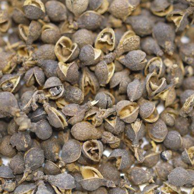 Ganshu Afrique Cameroun poivre faux zanthoxylum plateau