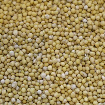 Moutarde blanche sénevé sanve