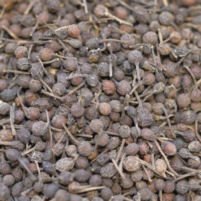 Poivre noir voatsiperifery Piper borbonense sud madagascar